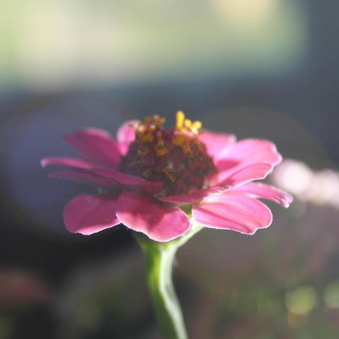 A New Life for this FibromyalgiaVictim